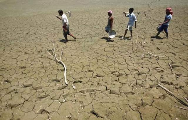 Indian Farmers Resort to New Cash Crop