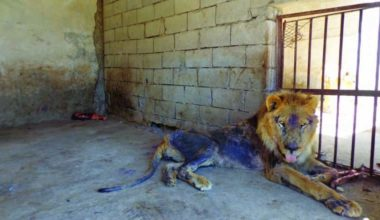 Yemen The Abandoned Animals of Taiz