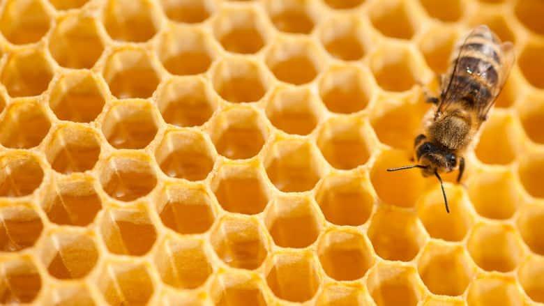 Lebanon: Bee Epidemic