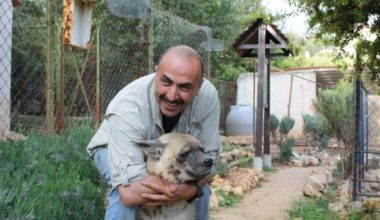 Baloo the Syrian brown bear